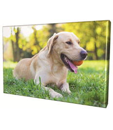 16 x 24 Rectangular Canvas Prints