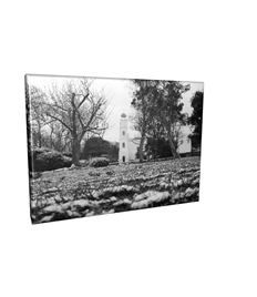20 x 20 Square Canvas Prints